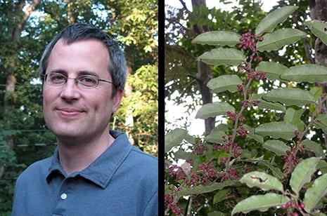 Andrew J. Alverson, Amborella in fruit