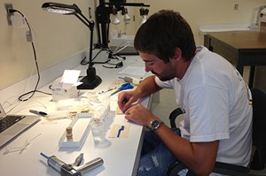 Honors biological anthropology student Charles Withnell used dental impression material to make casts of about 300 tiny shrew incisors.