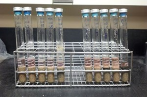 Methanogens contained in these test tubes, which also contained growth nutrients, sand and water, survived when subjected to Martian freeze-thaw cycles at the University of Arkansas.