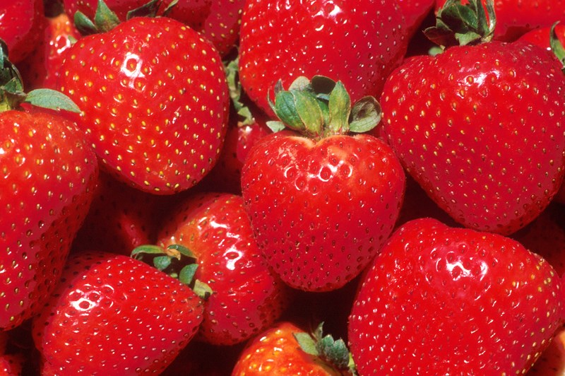 A new $1.05 million donation from the Walmart Foundation is providing fuel for strawberry researchers to prove their concepts in the field.
