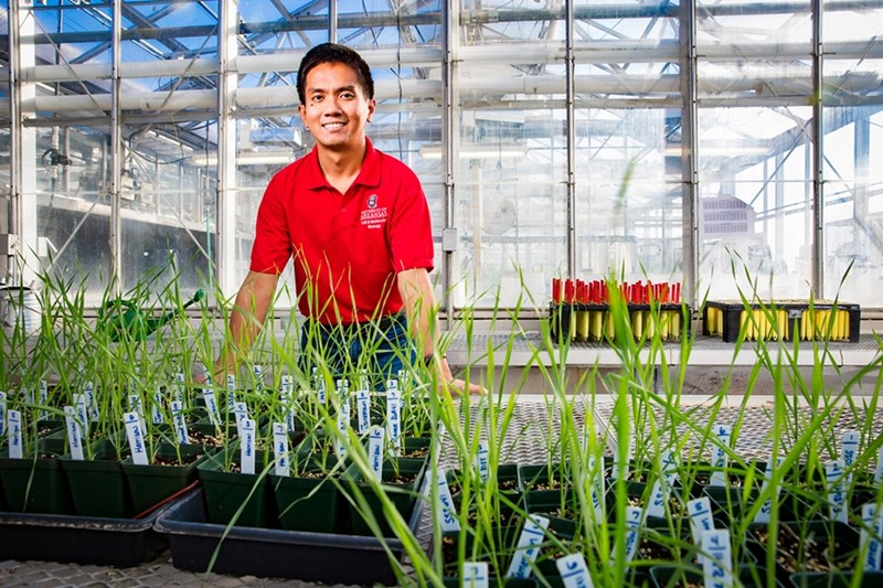 Dennis Lozada is working to breed wheat with a higher grain yield and that is adaptable in a wide variety of climates.