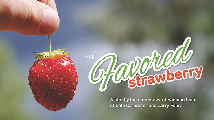 The Favored Strawberry documents the work of the U of A System Division of Agriculture and its Center for Agricultural and Rural Sustainability's National Strawberry Sustainability Initiative, which promotes sustainable production.