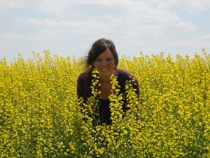 University of Arkansas graduate student Meredith G. Schafer and her colleagues have found genetically modified canola in wild populations in the United States.