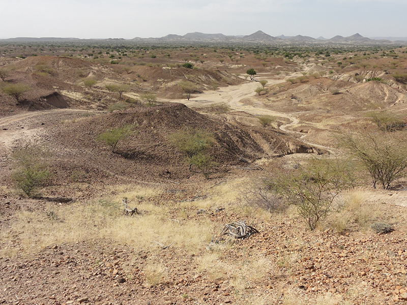 A photo of the arid Kanapoi site in Kenya, east Africa.