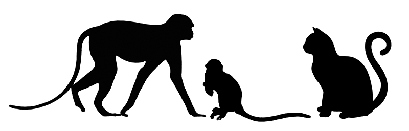 Silhouettes of a typical guenon, the much smaller Nanopithecus browni and a domestic cat, for comparison.