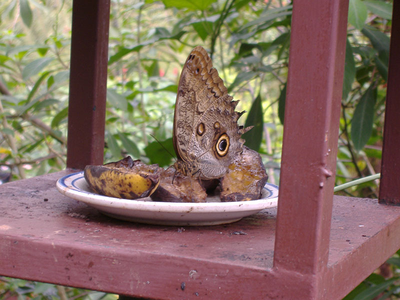 Photo of butterfly at feeding station.
