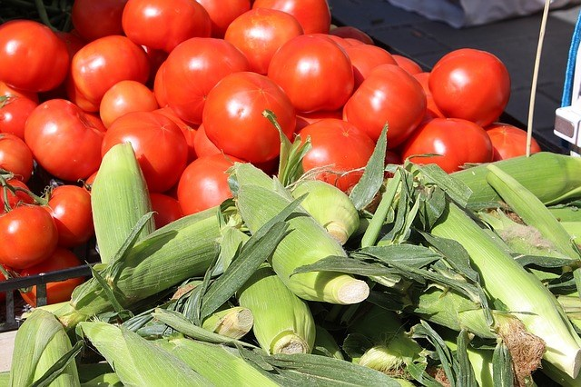 University of Arkansas researchers are studying risks that climate change could pose to crops like corn and tomatoes.