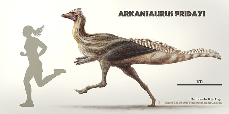 Arkansaurus fridayi would have been slightly taller than a human and a very fast runner.