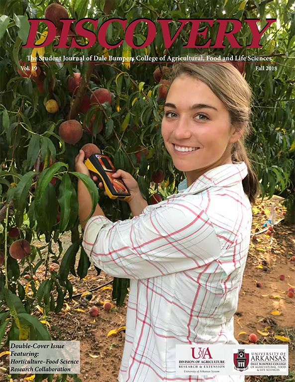 The Discovery 2018 double-cover issue features Bumpers College students Mary Siebenmorgen (peaches) and Aubrey Dunteman (blackberries) whose research was the result of a collaboration between the horticulture and food science departments with field work taking place at the UA System Division of Agriculture's Fruit Research Station in Clarksville, Arkansas.