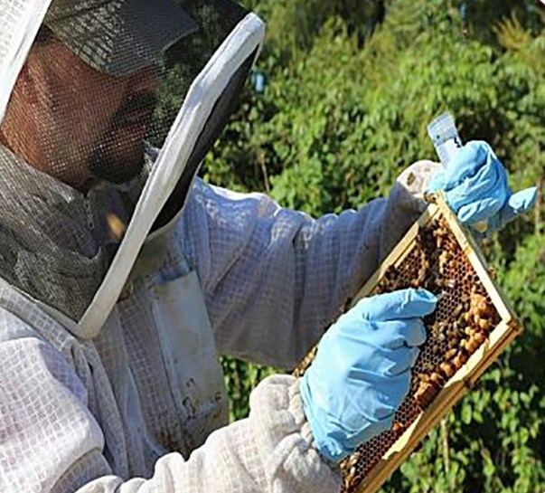 Jon Zawislak, an extension entomologist and doctoral student, is a resource for beekeepers around the state.