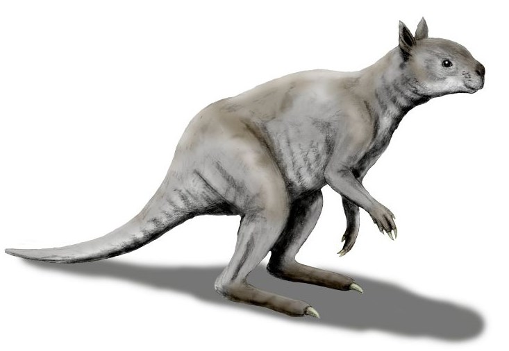 Artistic reconstruction of short-faced kangaroo.