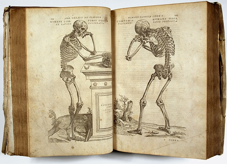 "Science Works: Pages from ""De Corporis Humani Fabrica,"" by Andreas Vesalius (1514-1564), a series of pioneering human anatomy books from the library archives of Exeter Cathedral."