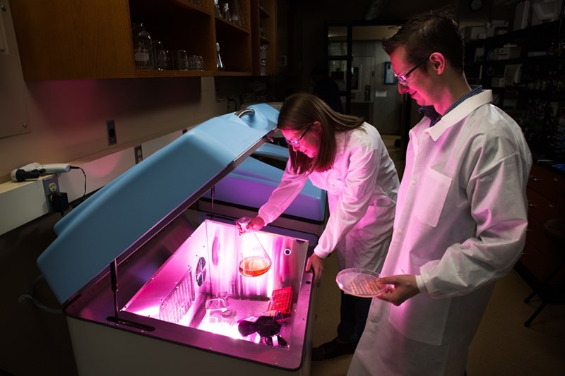 In a 2015 photo, Jeff Lewis (right), assistant professor of biological sciences, works with then-graduate assistant Rebecca Sides.
